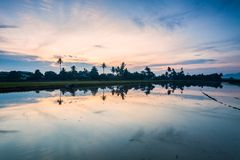 Paddy Field in Bukit Mertajam Penang, Maleisië royalty-vrije stock foto