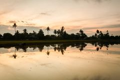 Paddy Field in Bukit Mertajam Penang, Maleisië royalty-vrije stock foto's