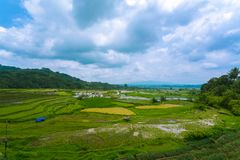 Paddy field in Bukittinggi West Sumatra Indonesia stock photo