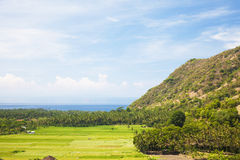 Paddy Field and Coast, Amed, East Bali, Indonesia. Image of a paddy field and the coast at Amed, East Bali, Indonesia Royalty Free Stock Photos