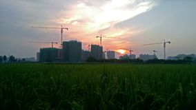 Paddy field with construction sites at background. Paddy field with construction sites at back stock footage