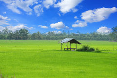 Paddy field and cottage Royalty Free Stock Image