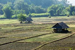 Paddy field in countryside Royalty Free Stock Photography