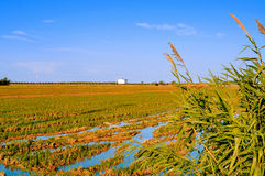Paddy field in Delta del Ebro, in Catalonia, Spain Stock Photos