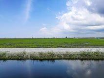 Paddy Field e lago Fotografia Stock Libera da Diritti