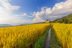 Paddy Field en terrasse Photographie stock