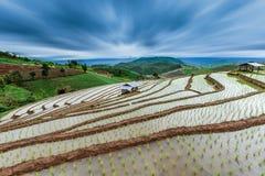 Paddy Field en terrasse dans le village de Mae-confiture, Chaingmai Photo stock