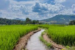 Paddy Field en terrasse dans le village de Mae-confiture, Chaingmai Photographie stock