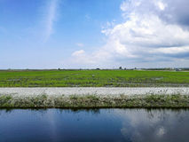 Paddy Field et lac Photo libre de droits