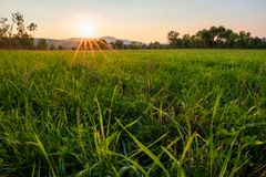 Paddy field farming at sunrise stock images