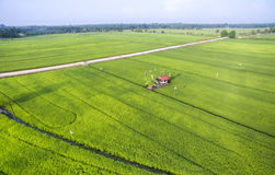 Paddy field growth up Royalty Free Stock Image