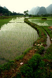 Paddy field of guilin country Royalty Free Stock Photos