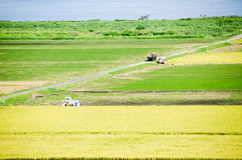 Paddy Field in Harvest Season Japan Royalty Free Stock Photography