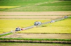 Paddy Field in Harvest Season Japan Stock Photography