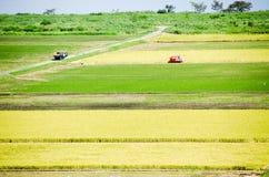 Paddy Field in Harvest Season Japan Stock Photo