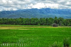Paddy field by the hill Royalty Free Stock Photography
