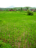 Paddy field and Indian village Stock Images