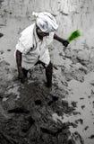 Paddy Field Kerala Indien Fotografering för Bildbyråer