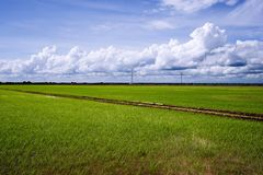 Paddy Field Landscape Stock Photos