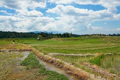 Paddy field at Medan Indonesia. A paddy field is a flooded parcel of arable land used for growing semiaquatic rice. Paddy cultivation should not be confused with royalty free stock photography