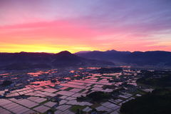 Paddy field of the morning glow Royalty Free Stock Photo