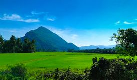 Paddy Field and Mount Baling. Scene of paddy field with Mount Baling at background in Baling, Kedah Malaysia royalty free stock images