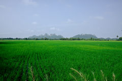 Paddy field and mountain. In Thailand royalty free stock photo
