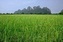 Paddy field and mountain. In Thailand royalty free stock image