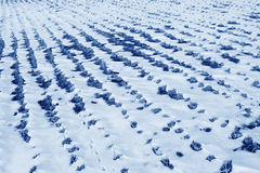 Paddy field natural scenery in the snow Stock Photography