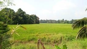 Paddy field near pampa river stock photos