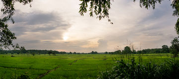 Paddy Field nello Sri Lanka fotografia stock