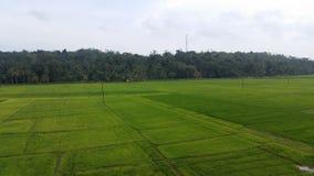 Paddy Field nello Sri Lanka immagini stock