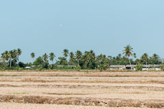 Paddy Field Off Season stockfoto