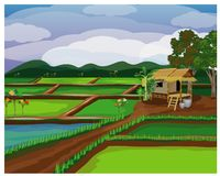 Paddy field. Design royalty free illustration