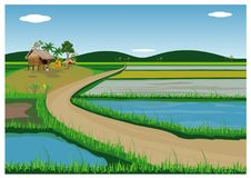 The paddy field. Vector design royalty free illustration