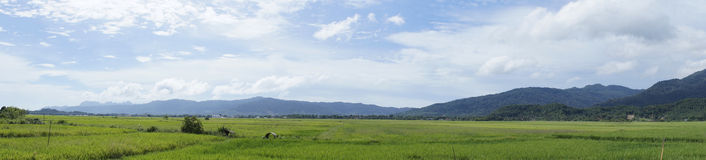 Paddy Field. Panorama view of paddy field in Langkawi, Malaysia stock image