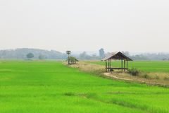 Paddy field or rice field with cottage. Paddy field or rice field with cottage, as nature background Stock Image