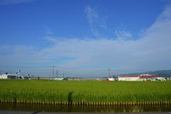 Paddy field. Rice is the most important ingredient for Japanese people, and rice appears on the table as much as it can be said for sure on three meals Royalty Free Stock Photography