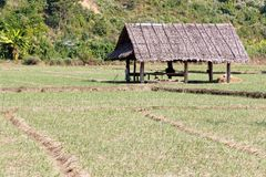 Paddy-field ridge and cottage Stock Images