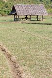 Paddy-field ridge and cottage Royalty Free Stock Images