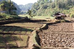 Paddy-field ridge,Traditional farming Stock Photography