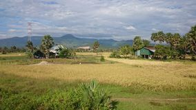 Paddy field scenery at Kampot Cambodia 3 Royalty Free Stock Image