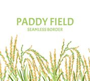 Paddy field seamless border.  Vector illustration of ears of rice. Paddy field seamless border. Vector illustration of ears of rice in cartoon, flat style royalty free illustration