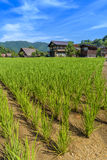 Paddy field in Shirakawa-go village Stock Photo