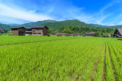 Paddy field in Shirakawa-go village Royalty Free Stock Images