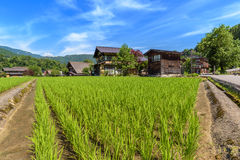 Paddy field in Shirakawa-go village Royalty Free Stock Image