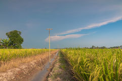 Paddy field with sky. A larger paddy field in selangor was this one at sekinchan royalty free stock photography