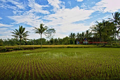 Paddy Field and a House Stock Photos