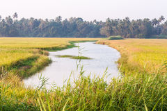 Paddy field with small river Royalty Free Stock Photo