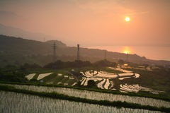 Paddy field and sunrise royalty free stock image